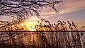 Der Dahlemer See am Morgen.jpg