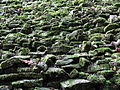 Detail of Stone with Moss - Palenque Archaeological Site - Chiapas - Mexico (15057166274).jpg