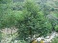 Dianjun, Yichang, Hubei, China - panoramio.jpg