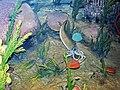 Diorama of a Silurian seafloor - cephalopod eating a calymenid trilobite, algae, bivalve, dalmanitid trilobites 2 (31846761318).jpg