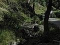 Divoká Šárka - panoramio (26).jpg