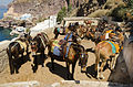Donkey trail - Fira - Thira - to Mesa Gialos port - Santorini - Greece - 04.jpg