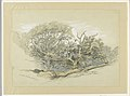 Drawing, Oak Wood, Montauk, New York, September 8, 1880 (CH 18369055).jpg