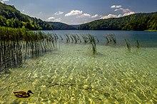 Утка на озере.jpg