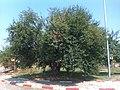 E75, Serbia - panoramio.jpg