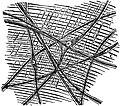 EB1911 Scyphomedusae - Scattered Nerve Ganglion Cells.jpg
