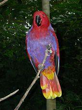 Female E. r. vosmaeri at North Carolina Zoo 835b138339