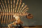 Edaphosaurus front.jpg