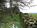 Edge of the wood near Sheriff Park - geograph.org.uk - 1160783.jpg