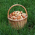 Edible fungi in basket 2020 G6.jpg