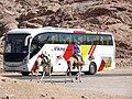 Egypt.Camels (9198165429).jpg