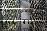 Emergence Cage in Butterfly Garden Changi Airport Singapore by Dr Raju Kasambe DSC 5250 (5).jpg