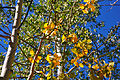 Emergence of Fall Colors (5009770972).jpg
