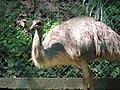Emu (7856517716).jpg