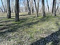 Engels, Saratov Oblast, Russia - panoramio (31).jpg