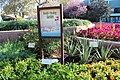 Epcot health and healing garden.jpg