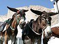 Esel auf Santorin.jpg