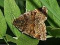Euclidia glyphica - Burnet companion - Клеверная совка бурая (39055799030).jpg
