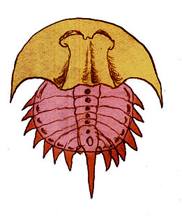 <i>Euproops</i> genus of arthropods (fossil)