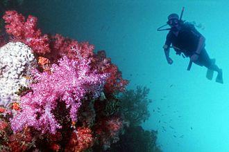 Sibu Island - A scuba diver at Sibu Island.