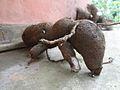Extra ordinary ant.jpg