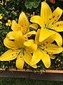 FLOWERs-13.jpg