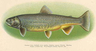 Sunapee trout Subspecies of fish