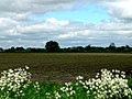 Farmland at Silverstone House - geograph.org.uk - 178466.jpg