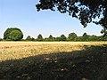 Farmland near Stanmore - geograph.org.uk - 39306.jpg