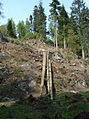 Felled Trees at Benmore (475885389).jpg