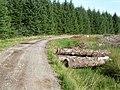 Felled timber, Spadeadam Forest - geograph.org.uk - 241600.jpg
