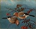 Ferdinand von Wright - Jays - A-2002-627 - Finnish National Gallery.jpg