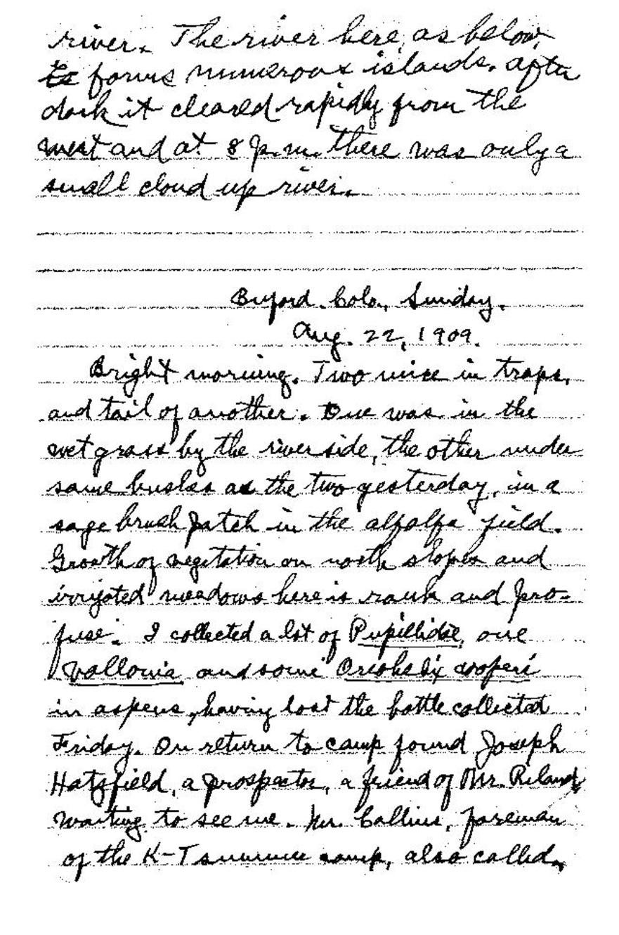 Page:Field Notes of Junius Henderson, Notebook 3 pdf/97