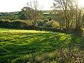 Field at Stoverlake - geograph.org.uk - 274750.jpg