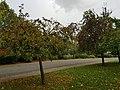 Finsbury Park 20171002 154108 (49369465303).jpg
