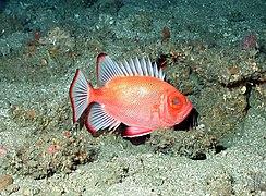 Fish3937 - Flickr - NOAA Photo Library.jpg