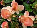 Fleurs vv4.jpg