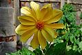 Flickr - ronsaunders47 - 24 Carat Flower..jpg