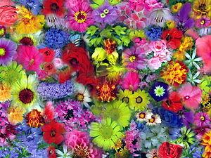 Flores GFDL99.jpg