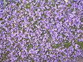 Flores en primavera.JPG