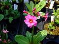 Flower-center132259.jpg