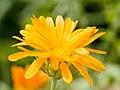 Flower (14659843328).jpg