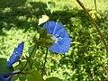 Flower @ Cubbon Park -6.jpg