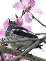 Flower Lover (13023171355).jpg