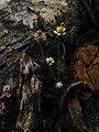 Flower blosoom.jpg