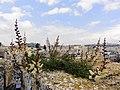 Flower on the wall - panoramio.jpg