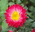 Flowers - Uncategorised Garden plants 79.JPG