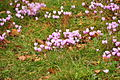 Flowers at Powderham Castle (7624).jpg