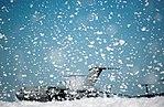 Flurry of foam released at Travis (9).jpg