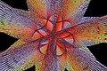 FlutterBy.jpg